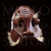 trufaldino Museo Internazionale della Maschera Amleto e Donato Sartori